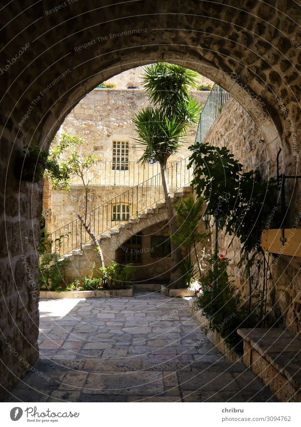 Paradise in the courtyard Deserted House (Residential Structure) Gate Wall (barrier) Wall (building) Stairs Sit Living or residing Warmth Safety Protection