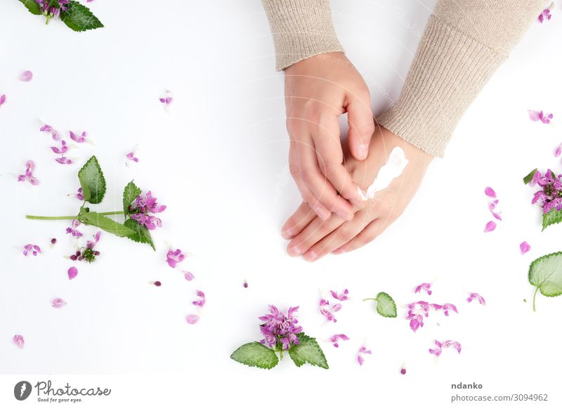 two female hands and a thick cream, top view Woman Plant Green White Red Hand Flower Leaf Adults Natural Fashion Above Decoration Body Fresh Skin