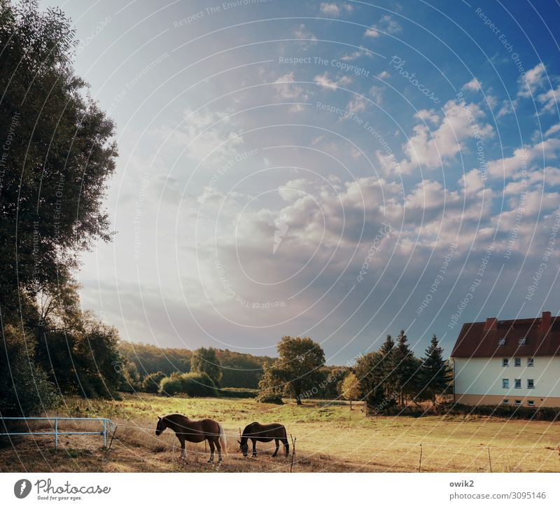 siesta Environment Nature Landscape Sky Clouds Horizon Autumn Beautiful weather Tree Grass Bushes Meadow Village House (Residential Structure) Horse 2 Animal