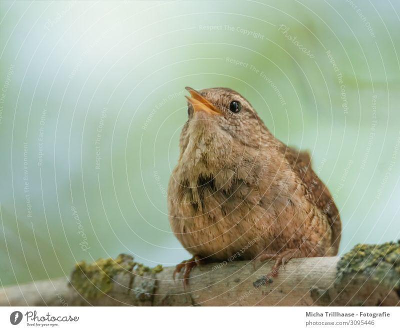 Sky Nature Green Sun Tree Animal Black Yellow Eyes Small Orange Bird Brown Head Communicate Wild animal