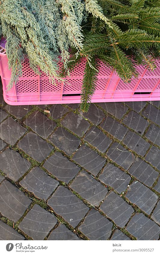 green, fresh fir branches, lying on a pink plastic box for sale, at the Christmas market. Offer of fir greenery for decoration, ornamentation and crafting of Advent wreaths during the Advent season. Fir twigs for sale at the cobblestone market.