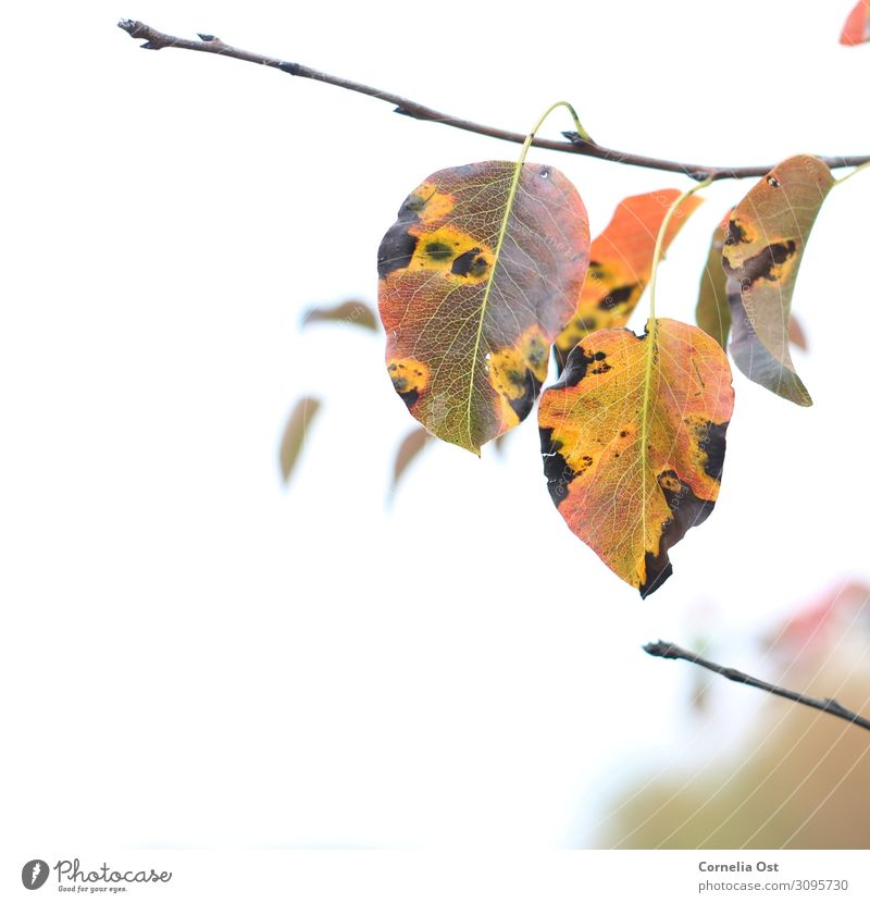 beginning of autumn Contentment Senses Relaxation Calm To go for a walk Environment Nature Plant Autumn Beautiful weather Tree Leaf Park Faded To dry up Natural