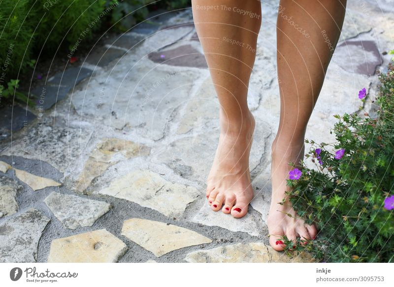 when it was still summer Lifestyle Beautiful Pedicure Nail polish Wellness Senses Leisure and hobbies Feminine Woman Adults Feet Women`s feet 1 Human being