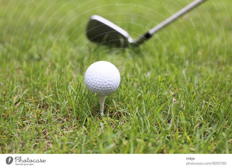 tee Sports Golf Golf ball Golf club Tee off Golf course Meadow Near Green White Colour photo Subdued colour Exterior shot Close-up Deserted Copy Space left
