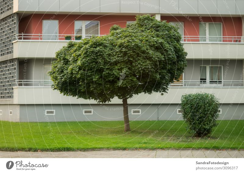Lawn and tree in front of a high rise in the city Flat (apartment) House (Residential Structure) Business Park High-rise Wall (barrier) Wall (building) Balcony