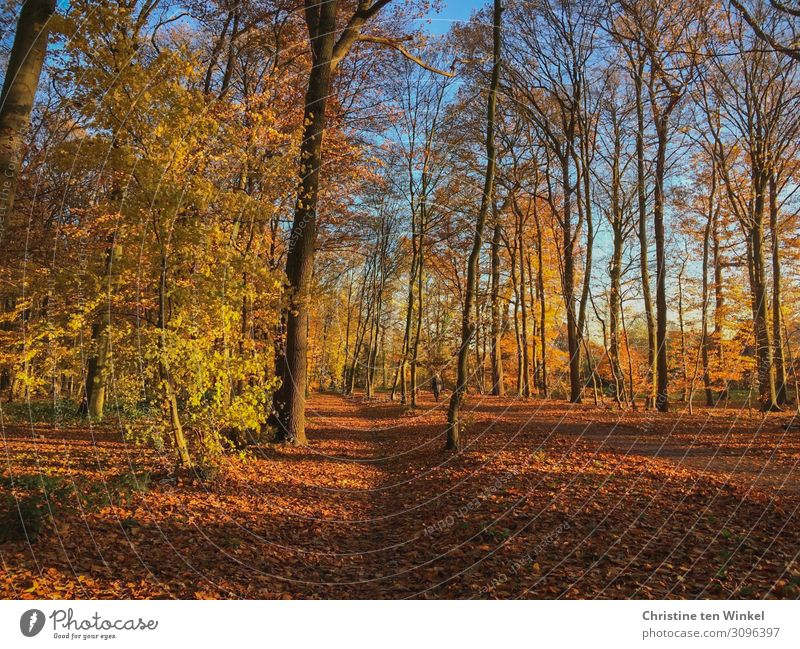 Sunny autumn forest Nature Landscape Earth Sunlight Autumn Beautiful weather Plant Tree Forest Friendliness Natural Blue Brown Multicoloured Yellow Orange