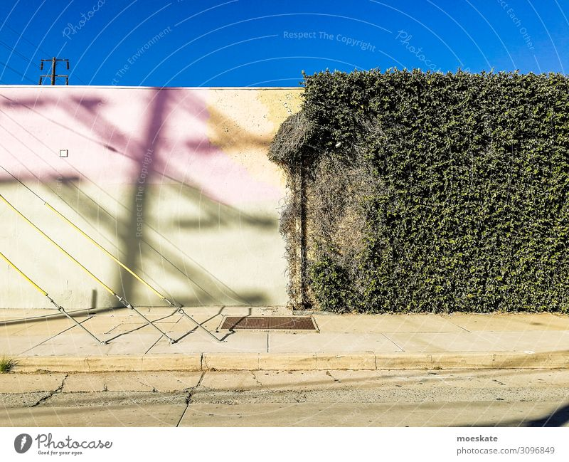 colorful wall Town Blue Gray Green Los Angeles Wall (building) Contrast California Ivy USA Colour photo Multicoloured Light Shadow Central perspective