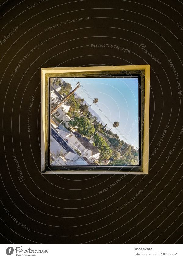 Los Angeles in crooked Town Blue California USA Window View from a window Tilt Diagonal Palm tree Colour photo Subdued colour Exterior shot Interior shot