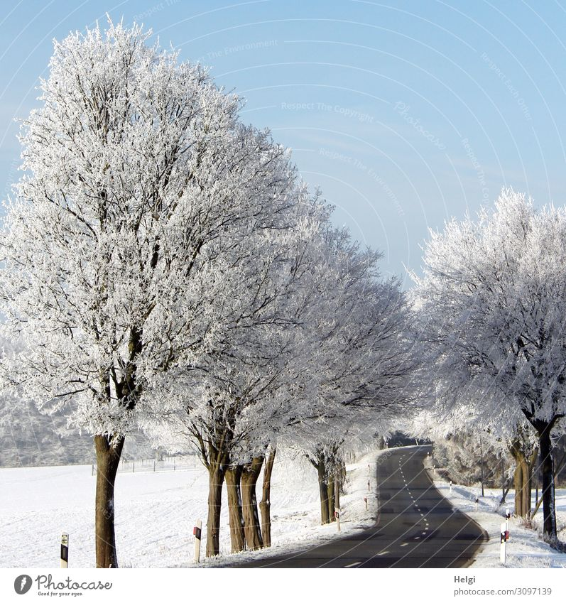Winter landscape with a winding road, trees covered with rime and blue sky Environment Nature Landscape Plant Beautiful weather Ice Frost Snow Tree Field