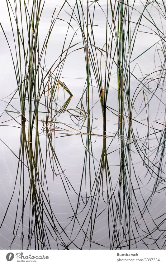 chi Environment Nature Plant Elements Water Grass Leaf Common Reed Lake Mirror Characters Line Esthetic Contentment Symmetry Subdued colour Exterior shot