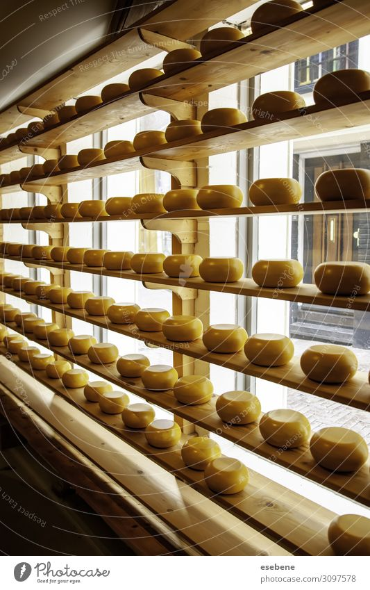 Dutch artisan cheeses Cheese Nutrition Shopping Tourism Industry Gastronomy Nature Village Wood Fresh Delicious Natural Yellow White Colour Tradition Tourist