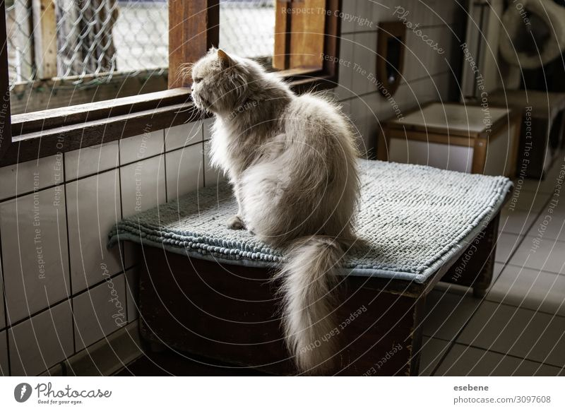 Abandoned cats in shelter Face Animal Pet Cat Paw Sadness Small Cute Gray Black White Protection Hope Fatigue furry needy Crate whiskers Tramp Fence young