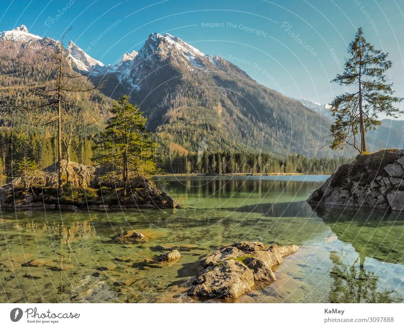 rear lake Vacation & Travel Island Mountain Nature Landscape Water Spring Tree Forest Alps Snowcapped peak Lakeside Germany Bavaria Berchtesgaden Alpes Europe