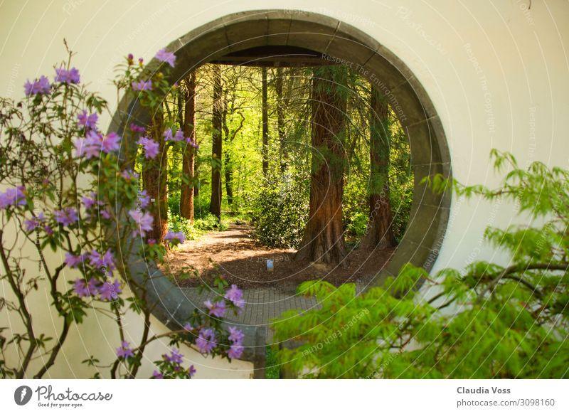 Nature Beautiful Landscape Tree Relaxation Animal Calm Happy Garden Moody Contentment Park Esthetic Success Romance Hope