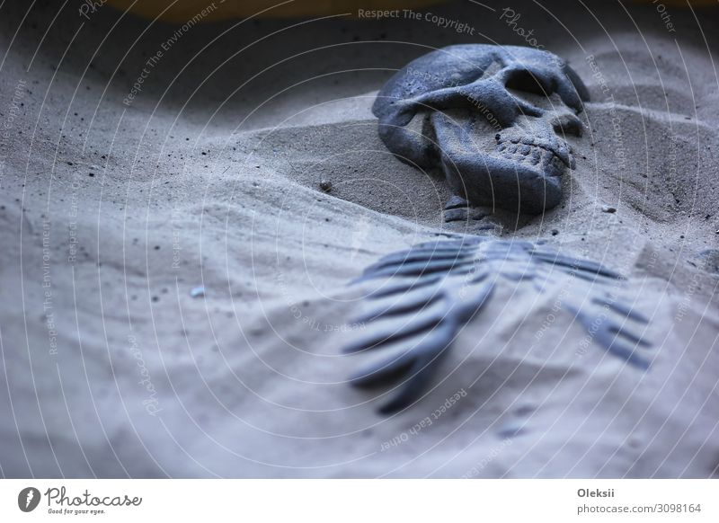 Excavated skeleton in sand Sand Fear End Peace Culture Colour photo Interior shot Copy Space left Night Deep depth of field Portrait photograph