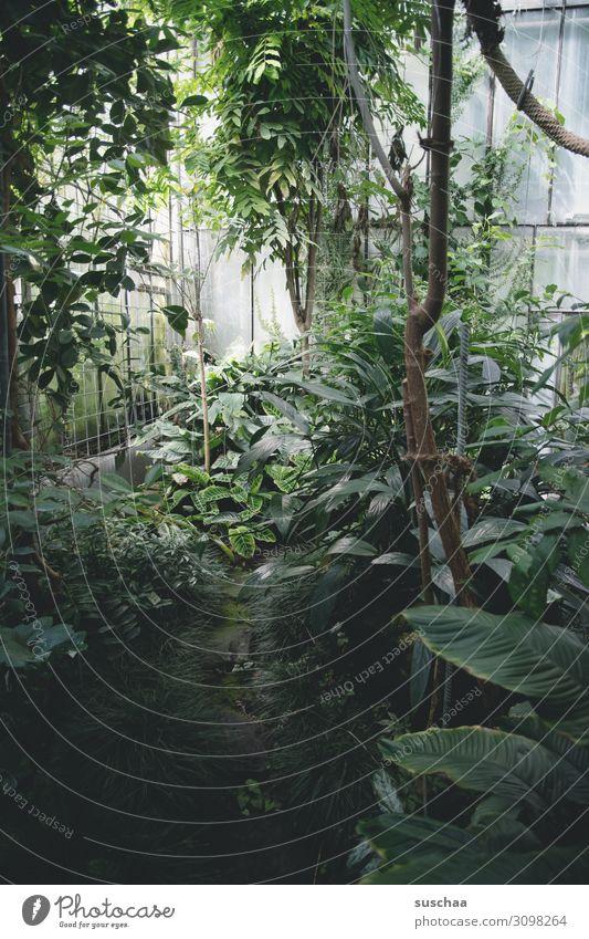 jungle (2) Greenhouse Botany Exotic Botanical gardens Garden Interior shot Virgin forest Palm tree Tree Fern Plant Leaf Nature Wellness green oasis
