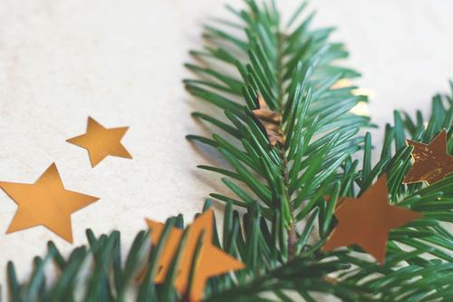 christmas deco stuff Christmas & Advent Fir branch Fir needle Star (Symbol) stars Christmas decoration Decoration Card Neutral Background