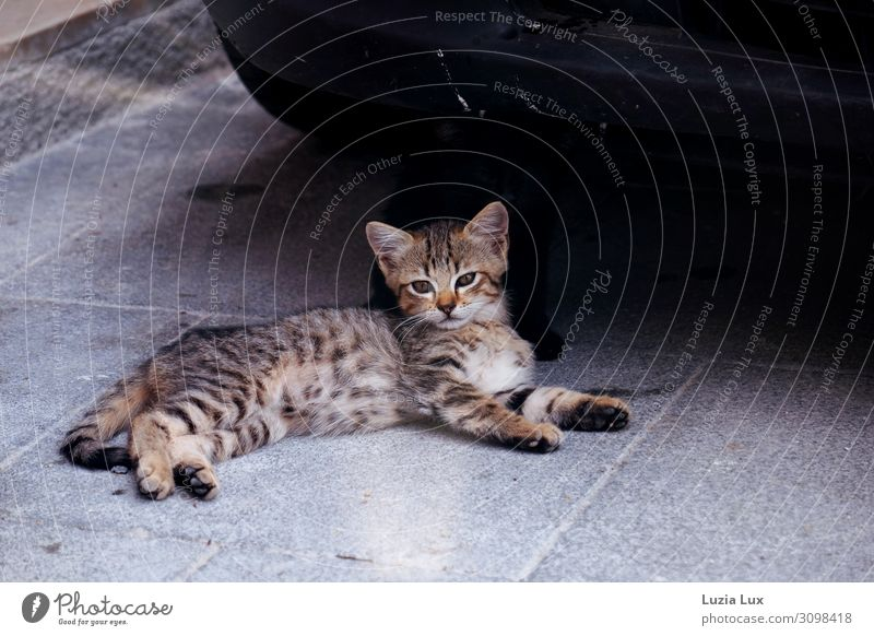 Cat Beautiful Animal Baby animal Together Pet Pelt Watchfulness Caution Pride Timidity Brothers and sisters Love of animals Kitten Tabby cat Street cat
