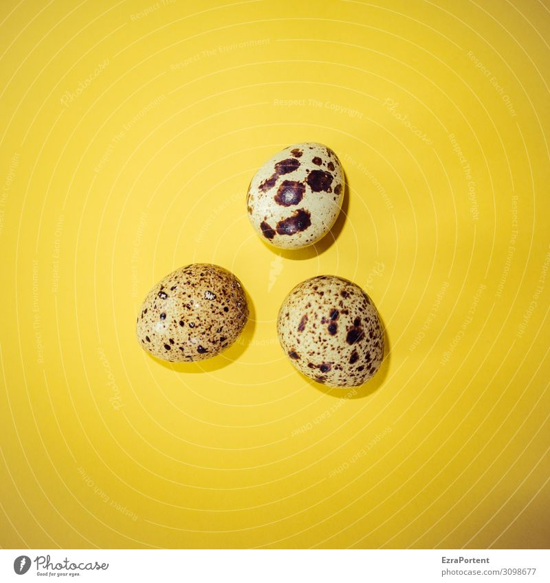 Egg Food Nutrition Organic produce Small Brown Yellow Beginning Quail's egg 3 Fragile Colour photo Interior shot Deserted
