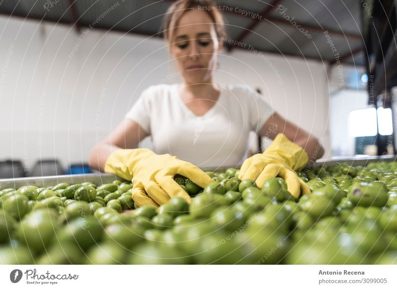 olive worker Fruit Work and employment Profession Workplace Factory Industry Business Company Human being Woman Adults Arm Vehicle Container Gloves Select Stand