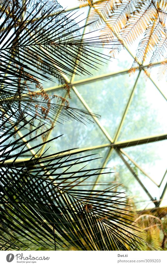 Plant Warmth Growth Glass Climate Protection Exotic Tropical Domed roof Triangle Greenhouse Palm frond