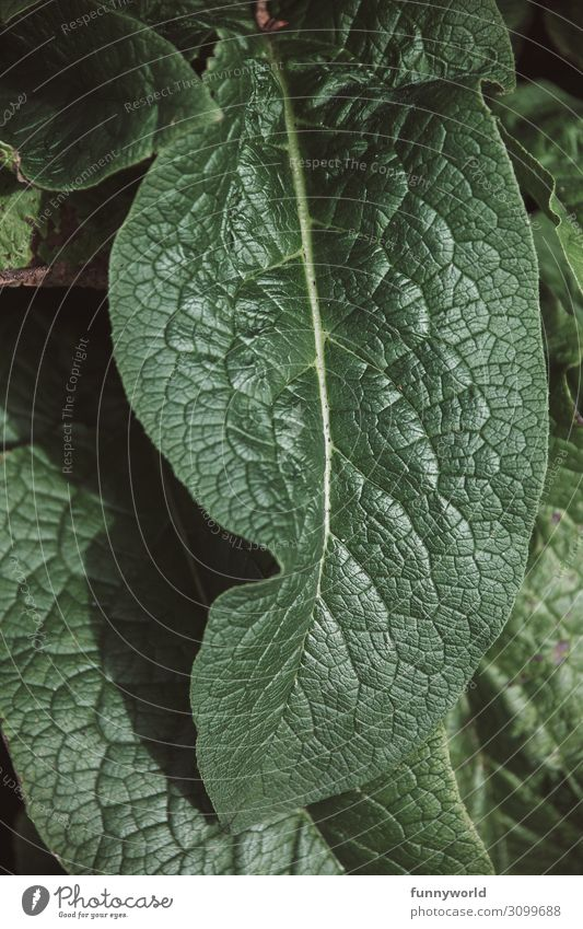 Green leaf with veins Leaf Plant Nature Macro (Extreme close-up) Detail Foliage plant structure Structures and shapes Close-up Exterior shot Summer Rachis