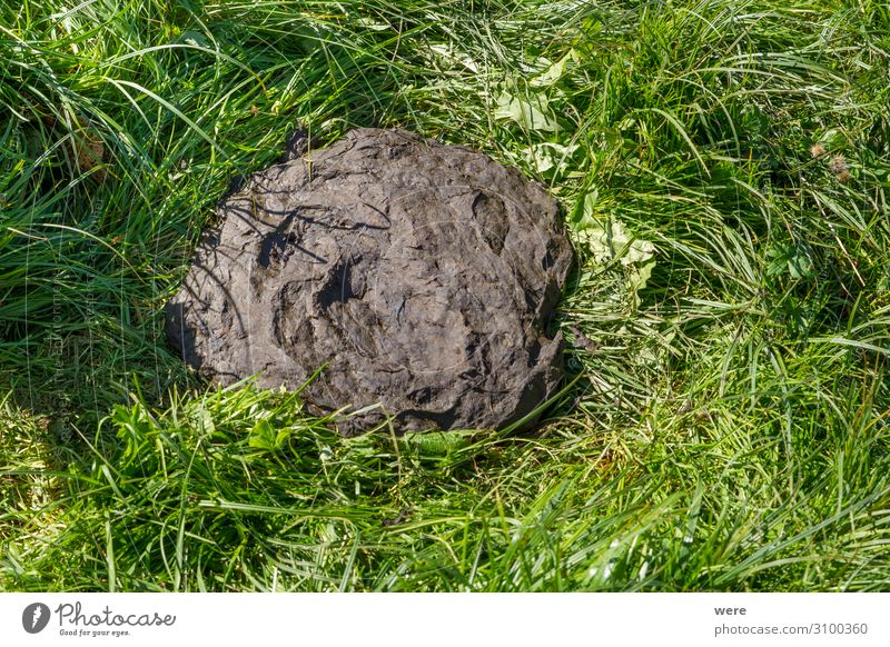 fresh cow dung in the green grass Nature Animal Cow Natural Soft Fragrance alpine meadow cattle copy space Manure more fertilizer graze herbivore dirty