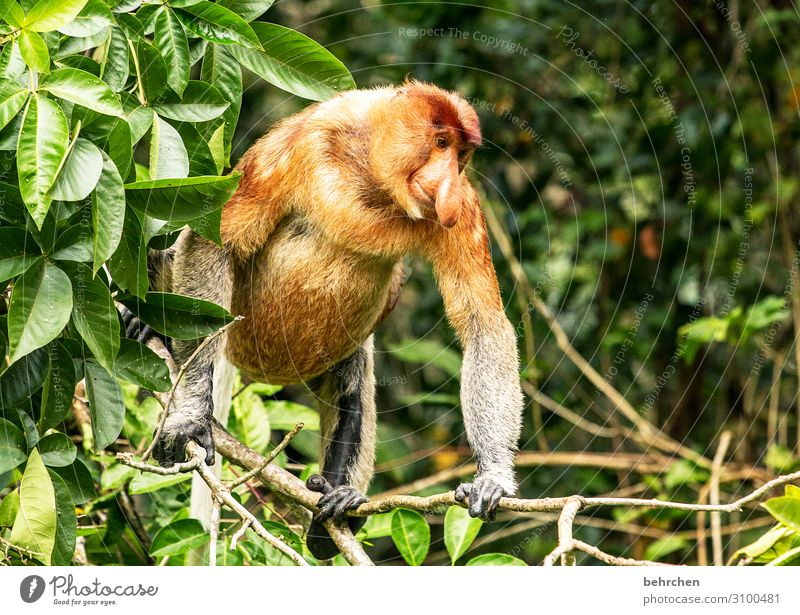 far away | there are the nastiest monkeys Animal portrait Sunlight Contrast Light Day Exterior shot Environmental protection Animal protection Close-up Nose