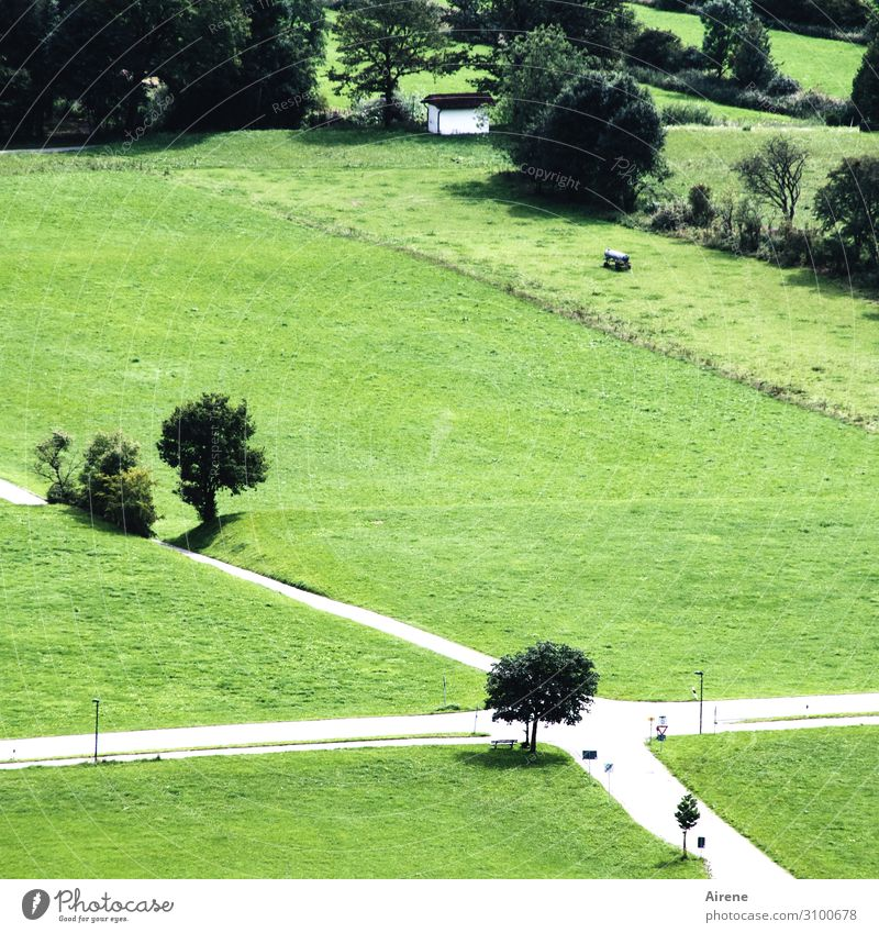 opportunities Landscape Summer Tree Meadow Field Crossroads Road junction Crucifix Hiking Green Orderliness Problem solving Center point Arrangement Planning