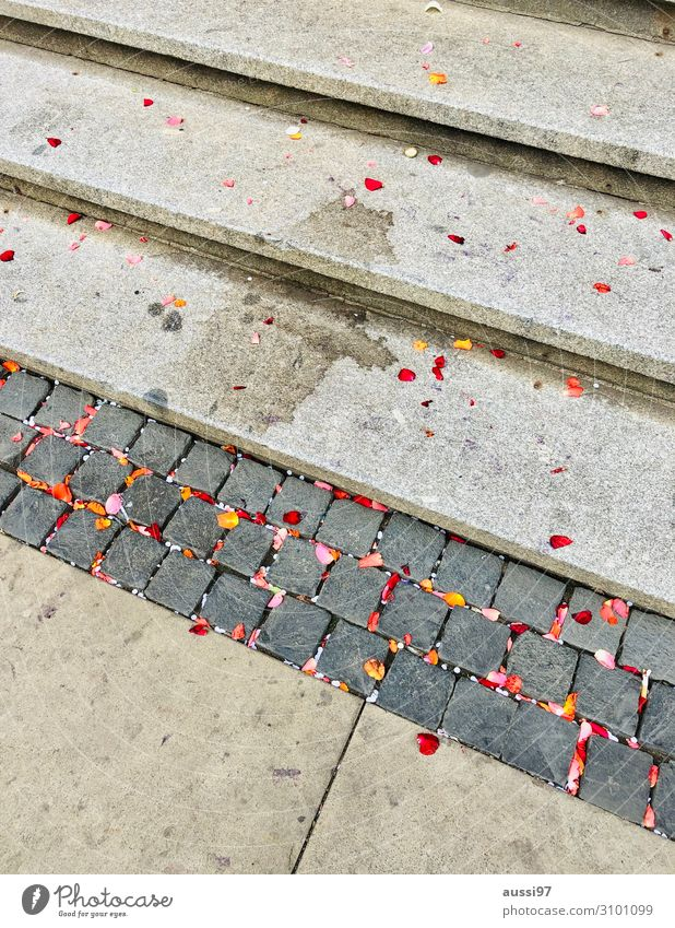 Party Stairs Dirty Wedding End Patch Blossom leave Confetti Sparkling wine City hall Adversity Grubby