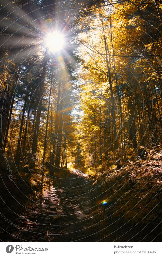autumn forest Well-being Contentment Relaxation Calm Meditation Hiking Nature Sun Sunlight Autumn Tree Forest Going Healthy Autumn leaves Autumnal Automn wood