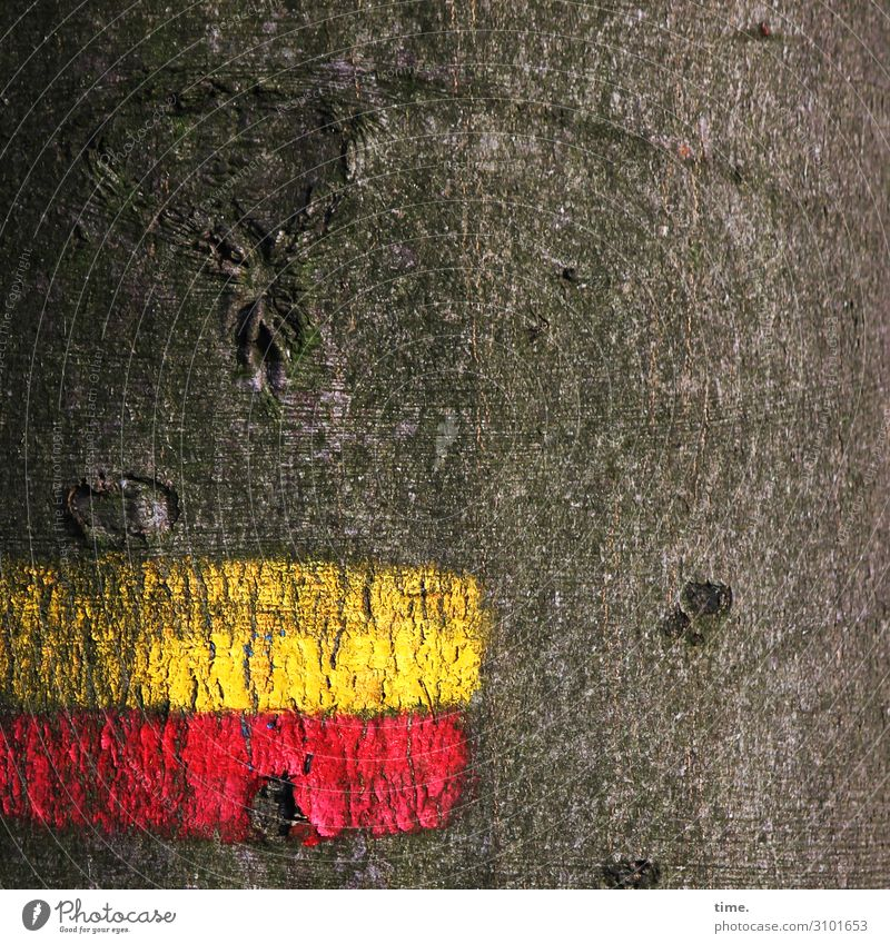 Tree & Message bark Tree trunk mark Red Yellow Hiking Orientation Clue Beech tree in the wood antagonism Thread communication vegetation Ethnic Puzzle colors