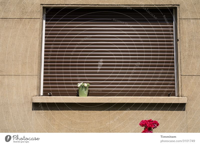 October blues Living or residing House (Residential Structure) Wall (barrier) Wall (building) Window Stone Plastic Simple Brown Green Red Emotions Orderliness
