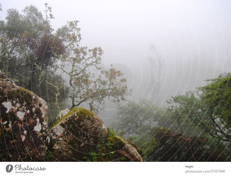 Trees and rocks in the fog Fog trees stones Eerie enchanted Mystic mysticism Creepy Autumn Fear Loneliness Bad weather Dark Forest Exterior shot Nature Deserted