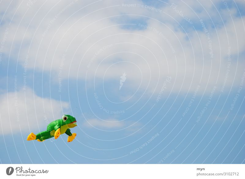 Frog Dragon Dragon flying in the sky before clouds Hang gliding Sky kites Clouds Jump Hop Flying Wind Air Ascending climb the kite Kite festival fly a kite