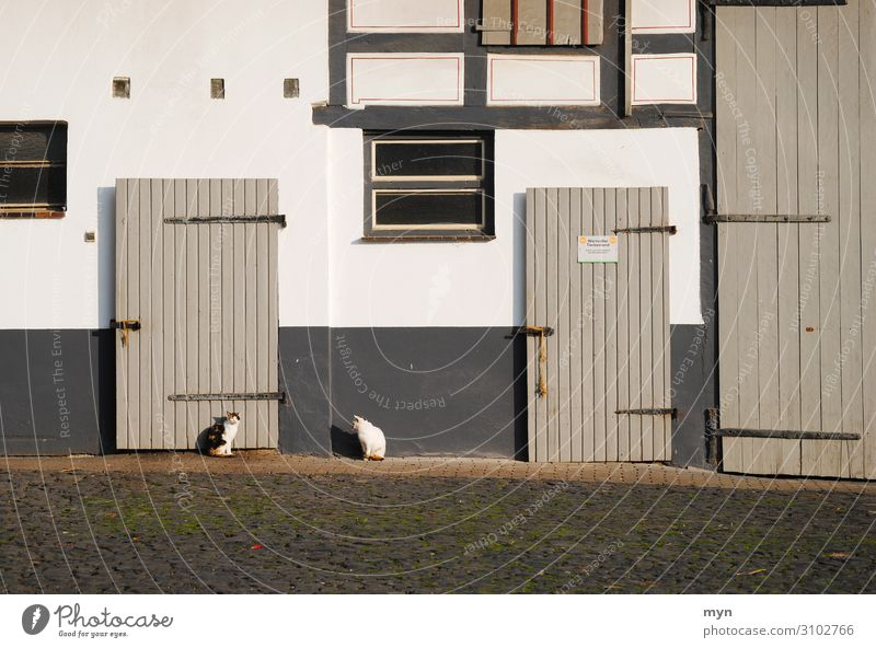 Cats in front of an old half-timbered farm cats door Barn Farm Abstract Window Facade House (Residential Structure) Deserted Colour photo Wall (building)