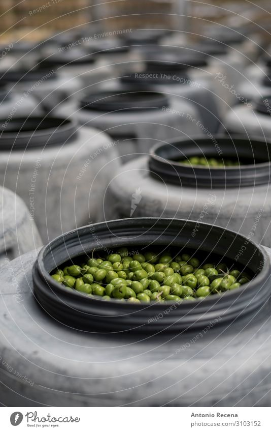 OLives on barrel Fruit Work and employment Factory Industry Package Fresh Green food deposit olive Olive oil Fermentation Beaded row focus in foreground