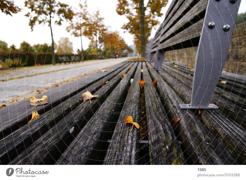 ParkBank Leisure and hobbies Sightseeing Autumn Tree Leaf Deserted Wood Metal Relaxation Smiling Walking Reading Listen to music Looking Sit Infinity Joy Happy