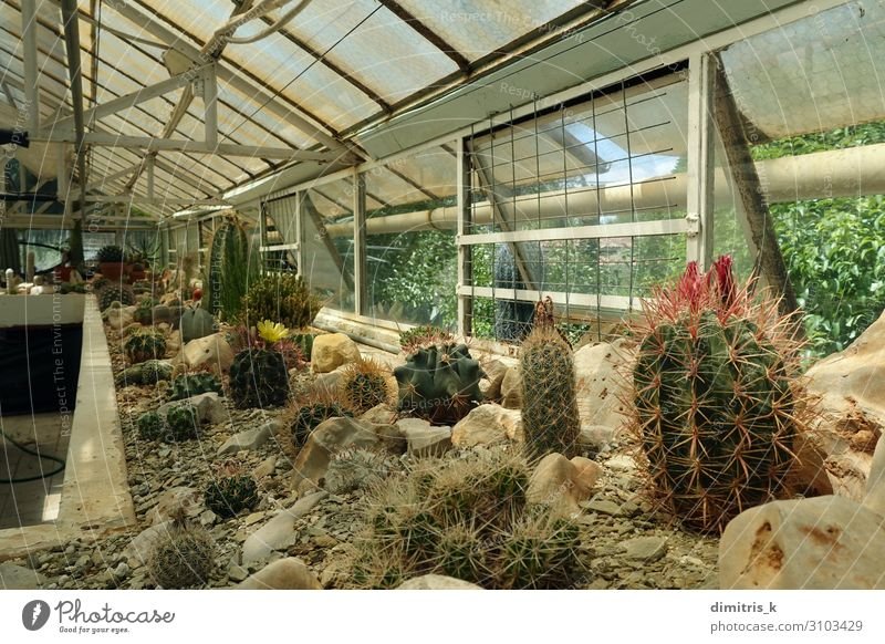 cactus plants in greenhouse interior Plant Flower Growth Living thing Botany Difference Cactus Greenhouse Succulent plants Cultivation