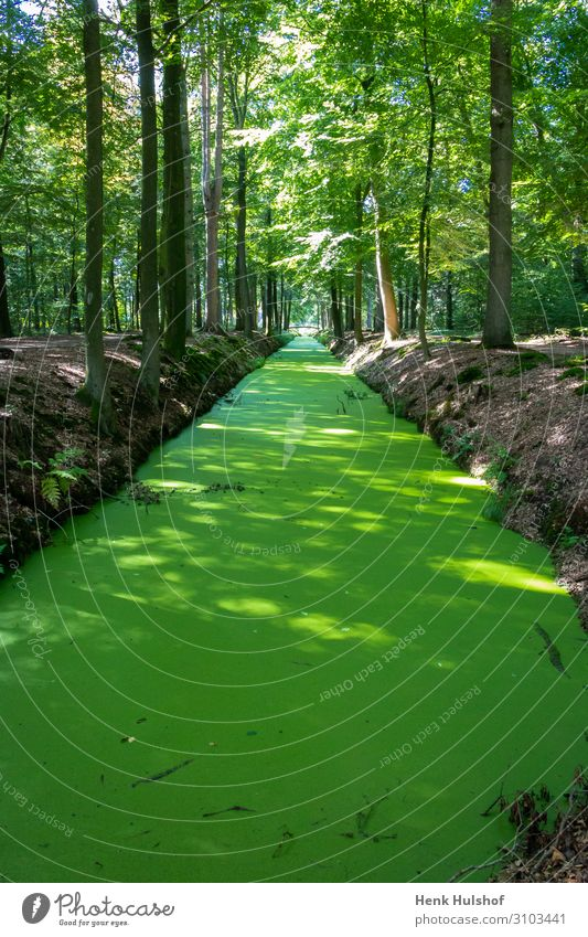 Ditch completely covered with duckweed in the forest beautiful branch channel color country countryside day ditch drainage ditch dutch ecology environment
