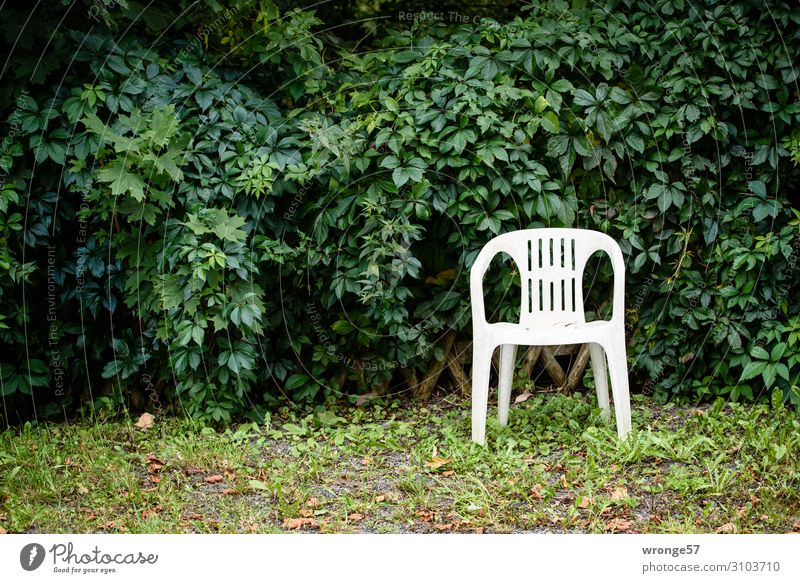 A place in the green Armchair Chair Bushes Garden Plastic chair Town Green White Loneliness Relaxation Calm Leaf Foliage plant Resting point Comfy chair