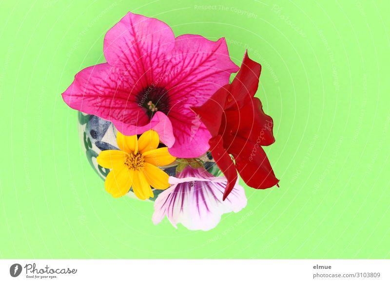 Colour Flower Joy Art Design Illuminate Fresh Esthetic Happiness Romance Blossoming Energy Break Bouquet Surprise Watchfulness