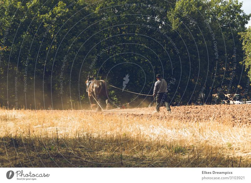 Harvest like in the old days Environment Nature Landscape Elements Earth Autumn Beautiful weather Field Work and employment Historic Autumn leaves Plow