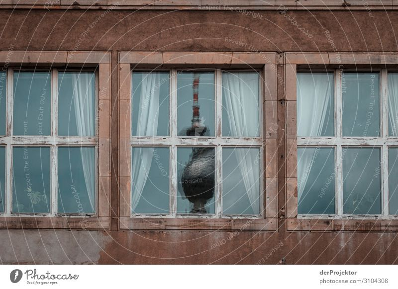 Vacation & Travel Window Architecture Berlin Building Tourism Exceptional Freedom Gray Esthetic Authentic Poverty Landmark Manmade structures City trip Monument