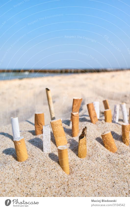 Close up picture of cigarette butts stuck in sand. Lifestyle Vacation & Travel Tourism Beach Ocean Environment Nature Sand Sky Horizon Coast Smoke Dirty Threat