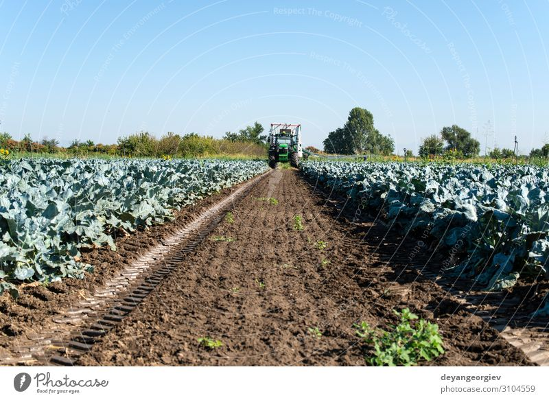 Tractor in broccoli farmland. Big broccoli plantation. Vegetable Vegetarian diet Work and employment Gardening Environment Landscape Plant Earth Leaf Growth