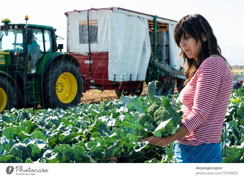 Worker shows broccoli on plantation. Vegetable Industry Business Technology Landscape Plant Tractor Packaging Line Green Broccoli Farmer agriculture