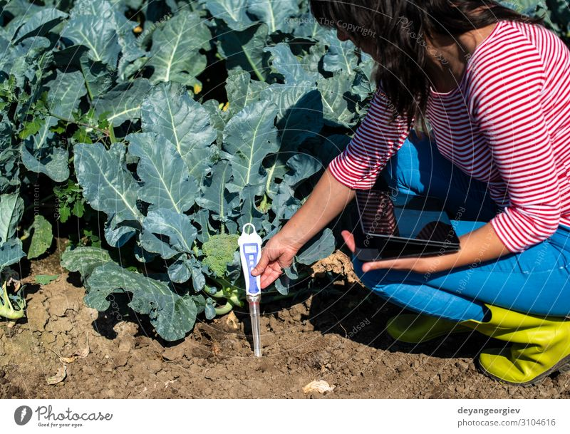 Agronom measure soil in broccoli plantation. Garden Laboratory Examinations and Tests Technology Environment Plant Earth Protection Testing & Control ph metric