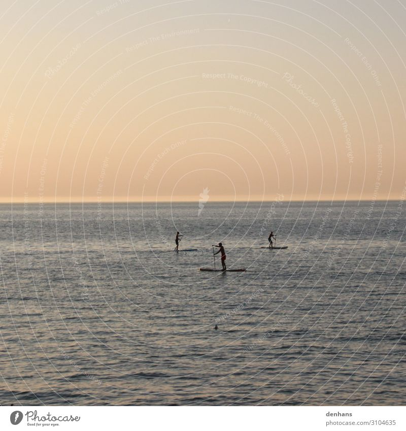 Three stand up paddlers on the sea Stand up paddling SEA Summer Summer vacation Ocean Aquatics board Paddle Study Human being Young man Youth (Young adults) 3