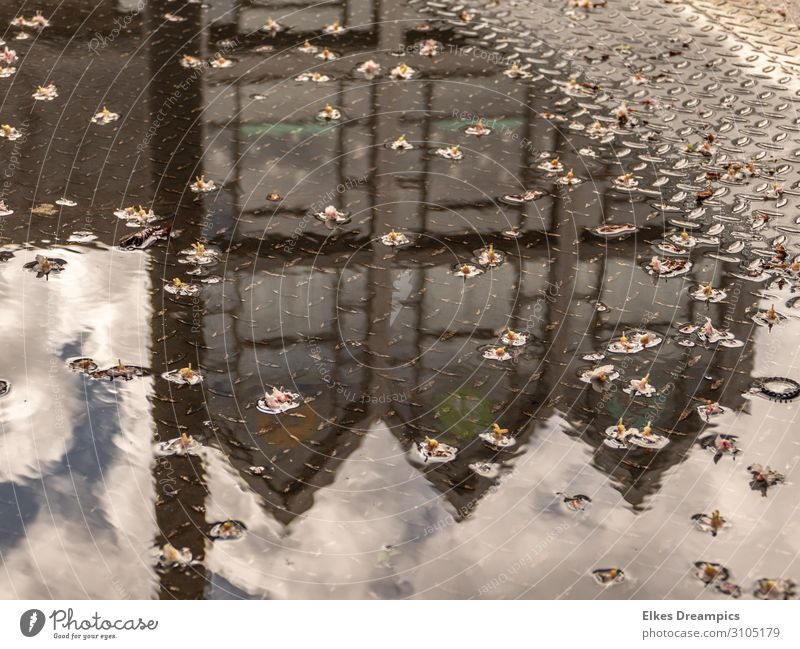 Building reflected in a puddle of flowers Water Sky Clouds Beautiful weather Rain bleed Town House (Residential Structure) built Architecture Idyll Aachen